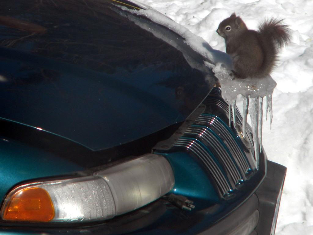 Winter Hood Ornament