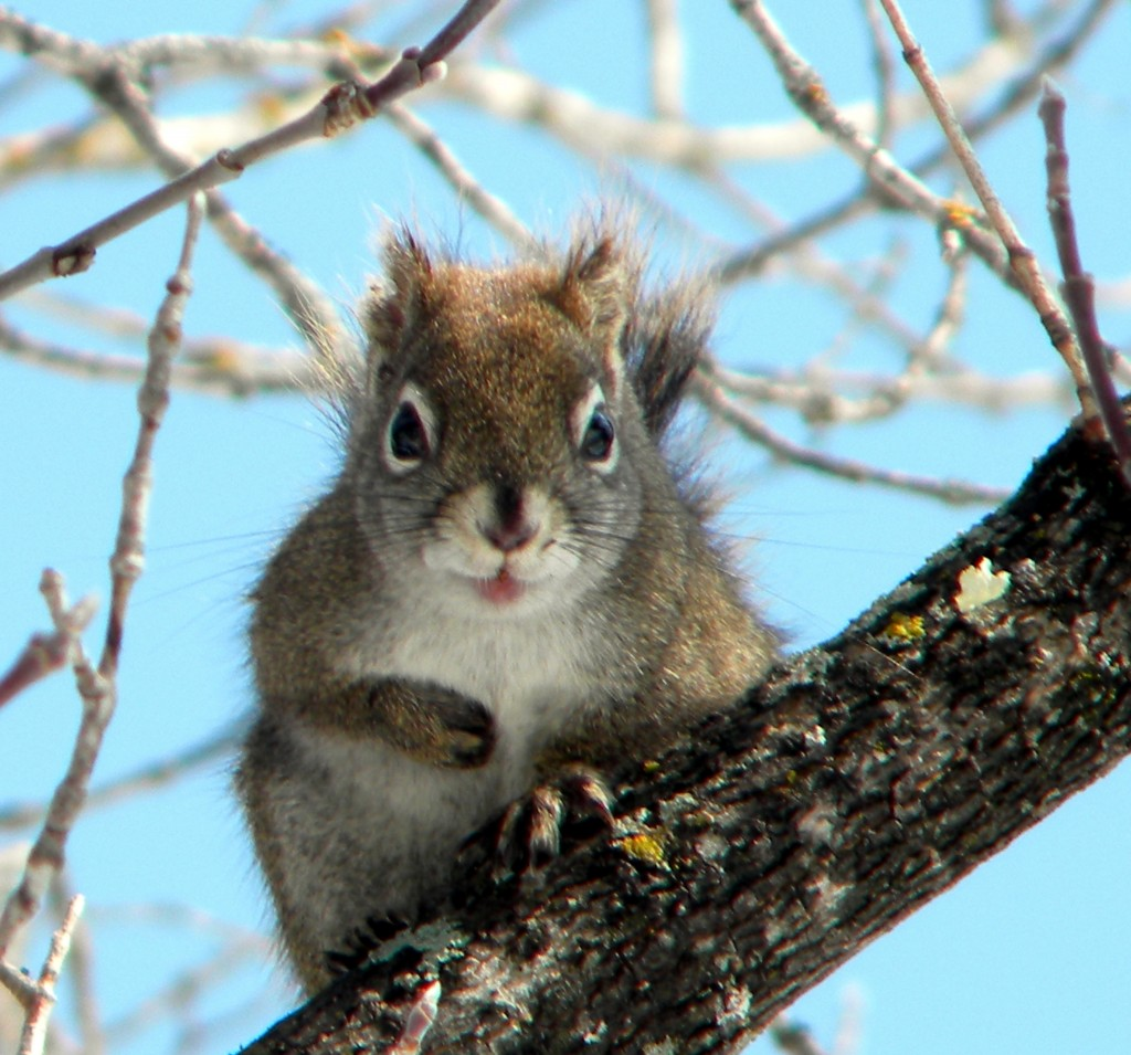 Squirrels stick out their tongues at Bad Weather
