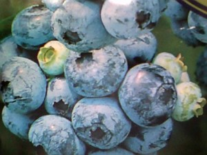Blueberries  are delicious!