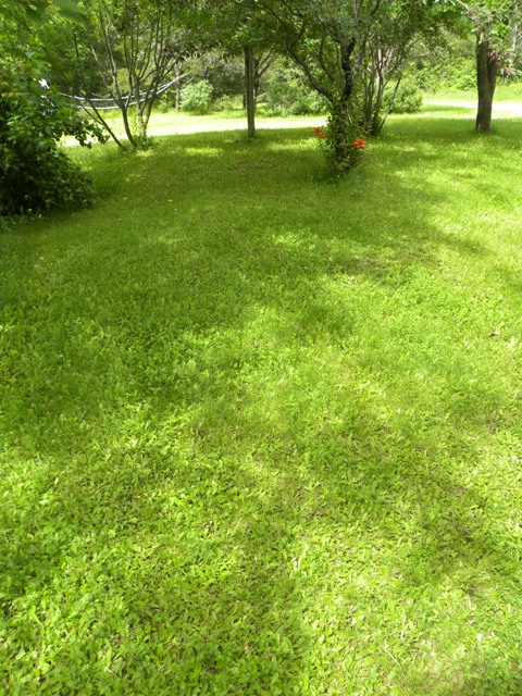 Attractive, Shady lawn