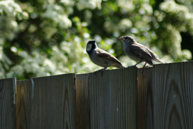 Chatter at the Back Fence