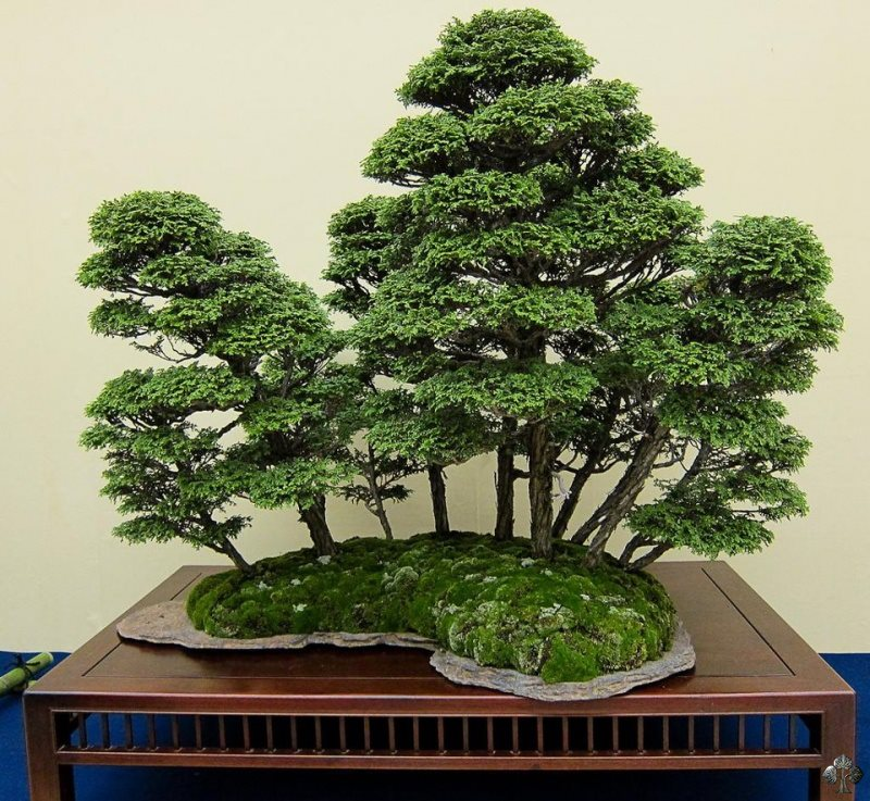 A beautiful bonsai forest