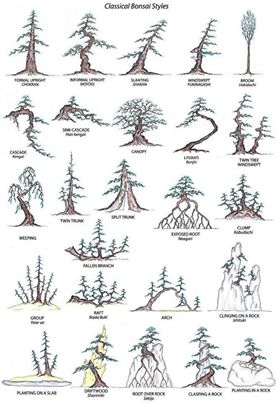 Popular bonsai styles